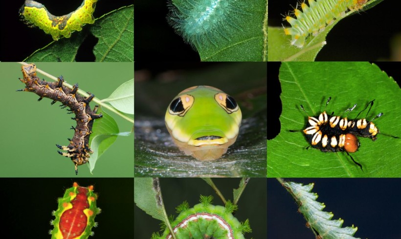 Study shows insect diversity decreases in gardens with non-native plants