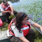 Oyster Bay NWR Invasive Removal USFWS Flickr
