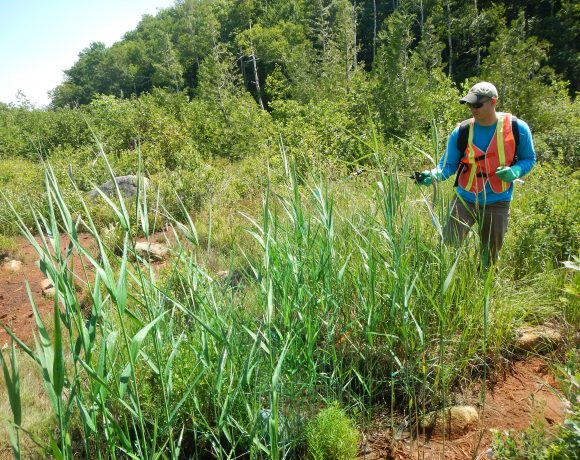 Research reveals widespread herbicide use on North American wildlands