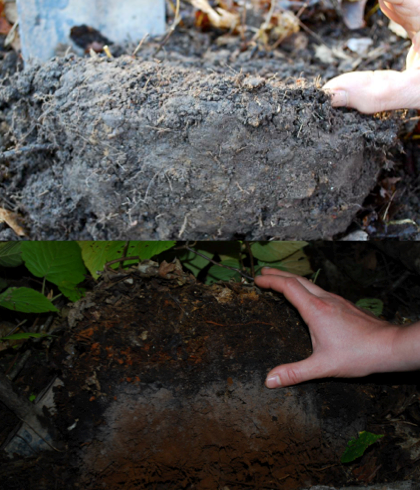 Underground Invaders:  Impacts and Implications of Non-native Earthworms in North America