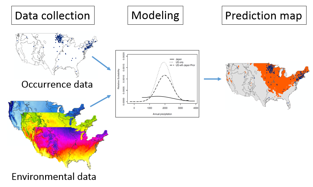conceptual diagram of how data are used in modeling to produce a species distribution map