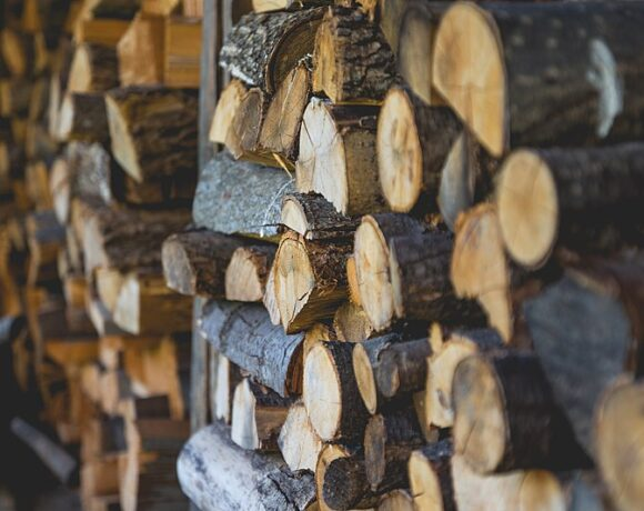Pests Hiding In Firewood | Research summary